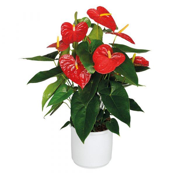 pianta consegna a domicilio
