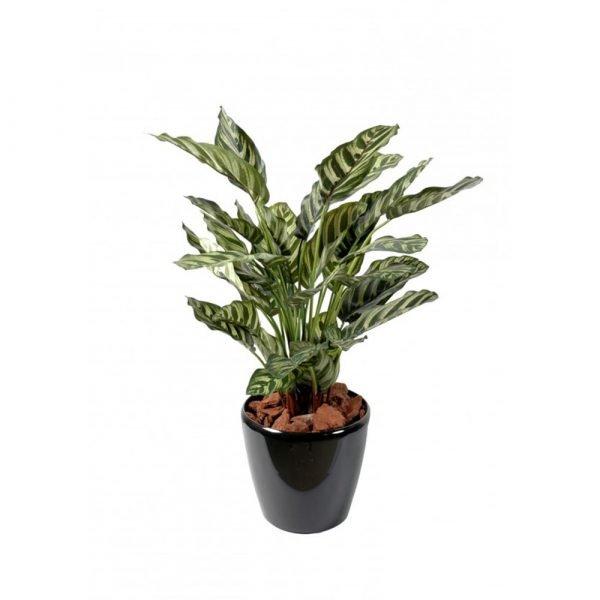 pianta regalo