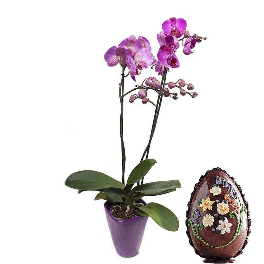 Uovo artigianale e pianta a domicilio