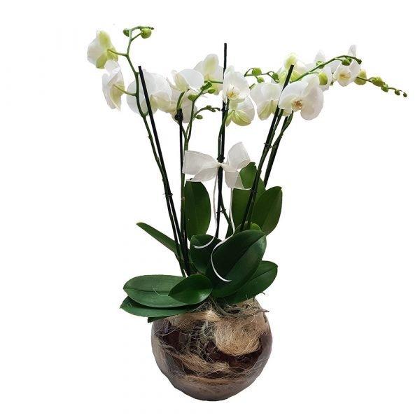 fiori eleganti