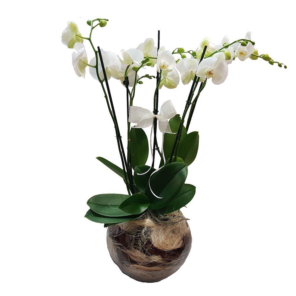Piante Da Regalare A Pasqua prestigio: composizione di orchidee in vetro