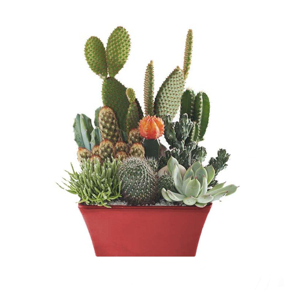 consegna a domicilio piante grasse